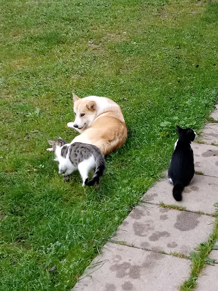 Katzen, Dips und Daps - Hund