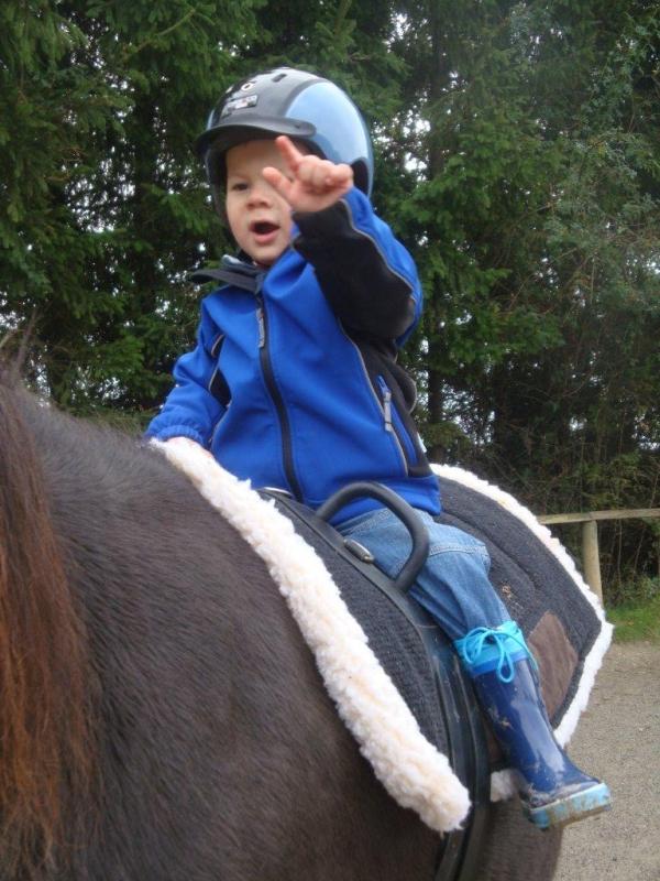 Psychotherapie & Pferde - die Idee