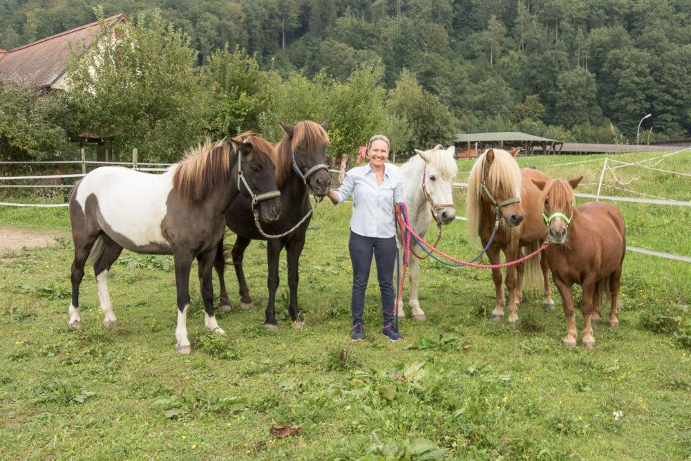 DiPPids - Pferde