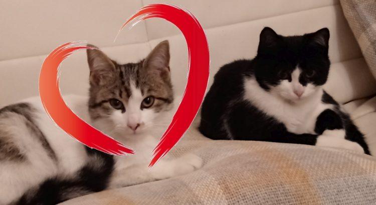 Katzen Dips & Daps