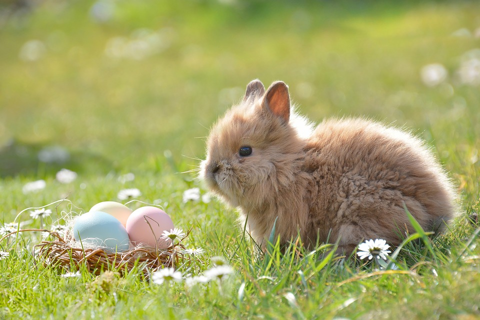 Ostern Hase Eier