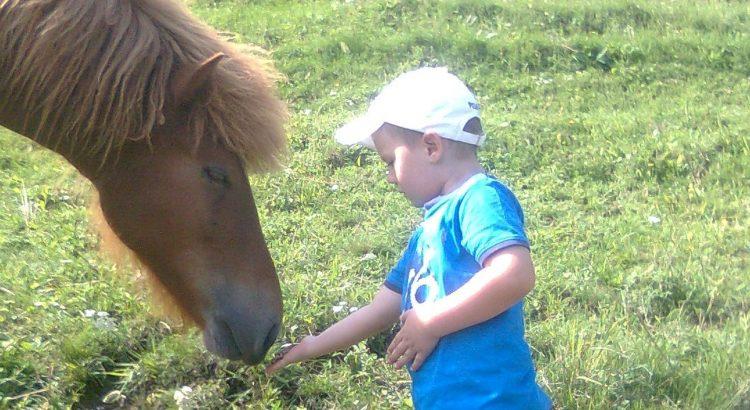 Pferdegestützte Psychotherapie